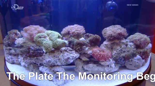 Watch and share How It's Made GIFs and Reef Aquarium GIFs by fannie123 on Gfycat