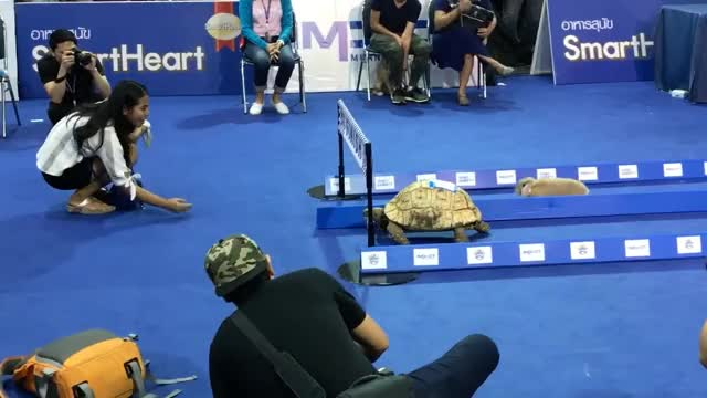 Watch and share Tortoise Vs. Hare GIFs by joegreen1233 on Gfycat