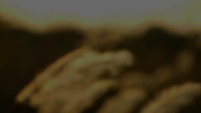 Watch and share Åkergløden - Facebook (1920 X 1080) GIFs on Gfycat