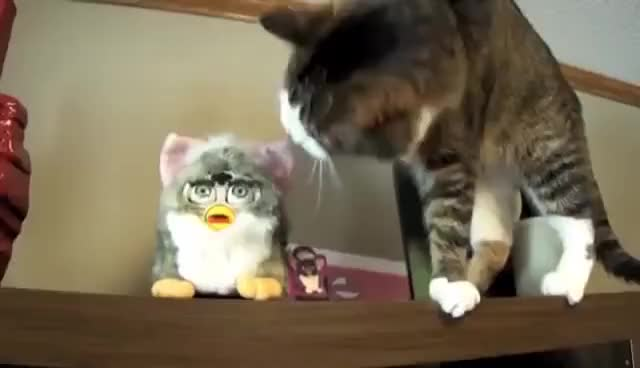 Watch cat vs furby GIF on Gfycat. Discover more cat, furby GIFs on Gfycat