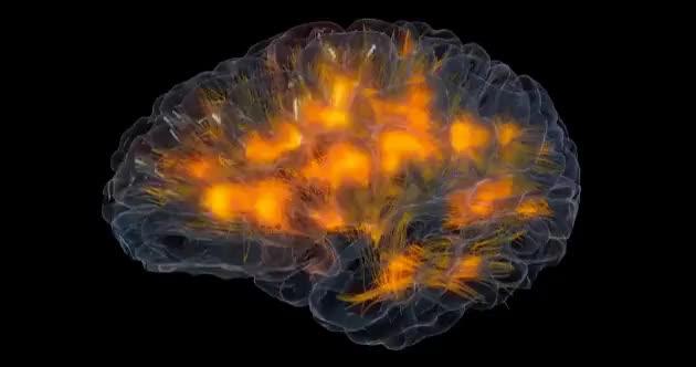 Watch and share Brain GIFs on Gfycat