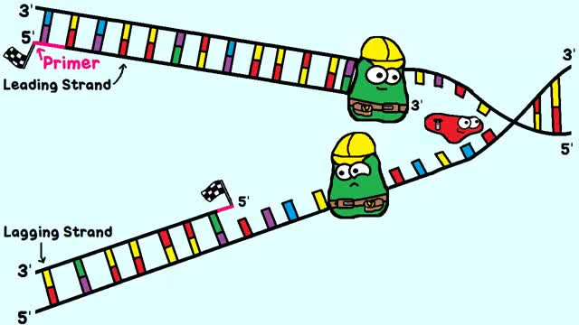 Watch and share Dna Replication GIFs and Replicating Dna GIFs on Gfycat