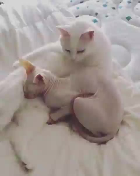 Watch and share Cats GIFs by tothetenthpower on Gfycat