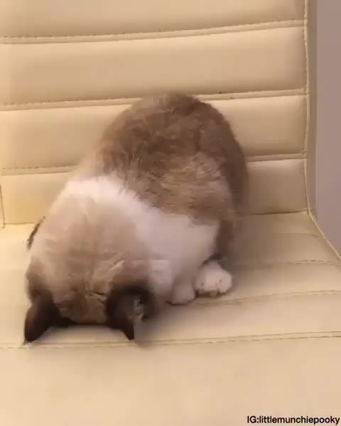 catsmyhappy, sweet cats, she enjoys naps faceplanted GIFs