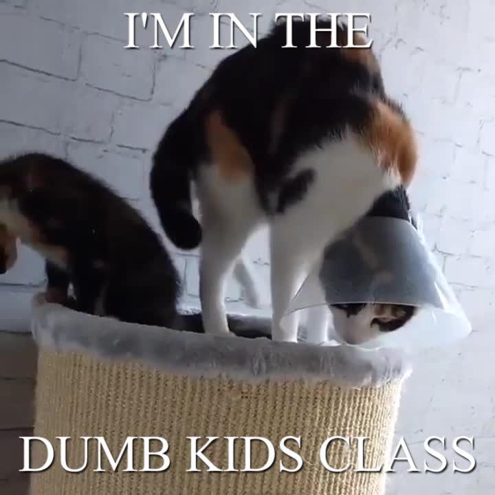 AnimalTextGifs, I'm in the dumb kids class. GIFs