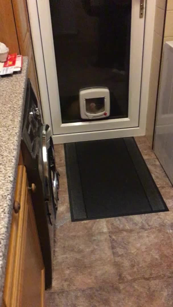 Watch this cat GIF by Absolute Unit 🔥🔥 (@entfanatic) on Gfycat. Discover more aww, cat, cat flap, cute, knocker, paw GIFs on Gfycat