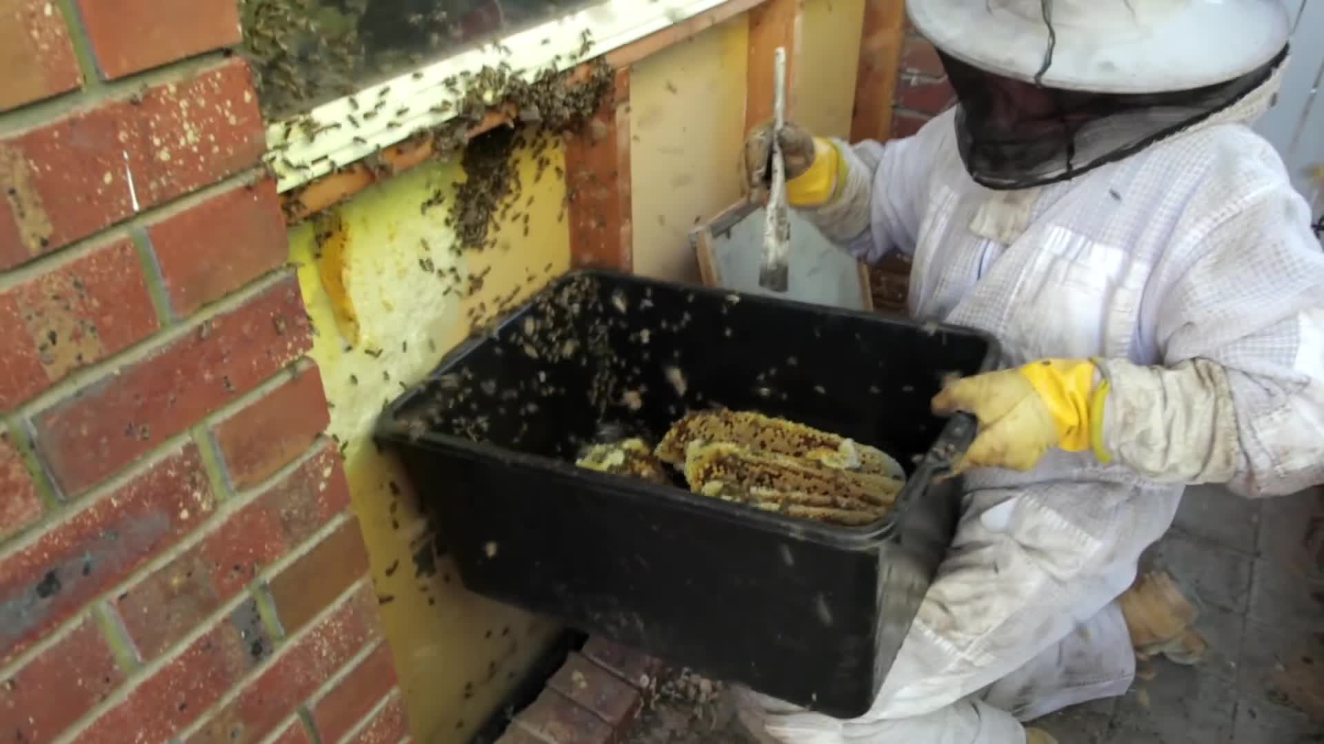 bee hive, bee keeper, bee keeping, beekeeper, beekeeping, bees, honey, honey bees, how to keep bees, wild bee hive,