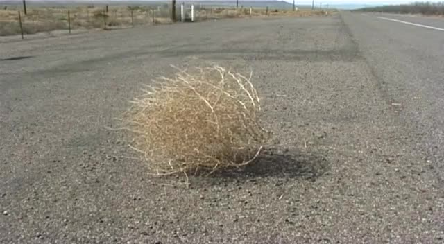 Watch Tumbleweed GIF on Gfycat. Discover more related GIFs on Gfycat