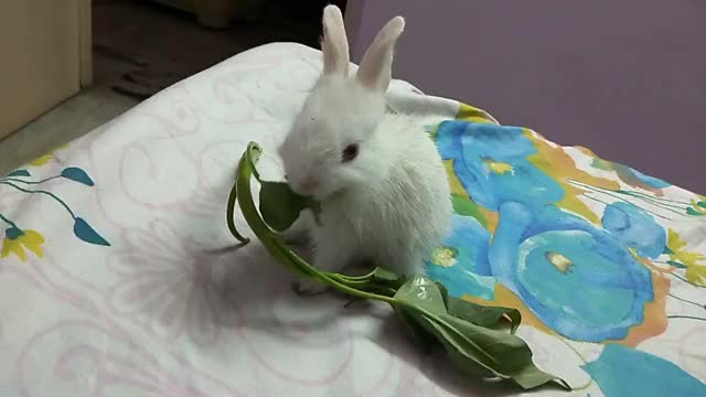 Watch Cute Bunny GIF on Gfycat. Discover more related GIFs on Gfycat