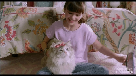aww, awwgifs, movies, Nine Lives GIFs