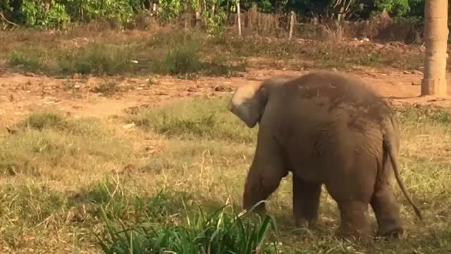 from elephantsbylouise GIFs
