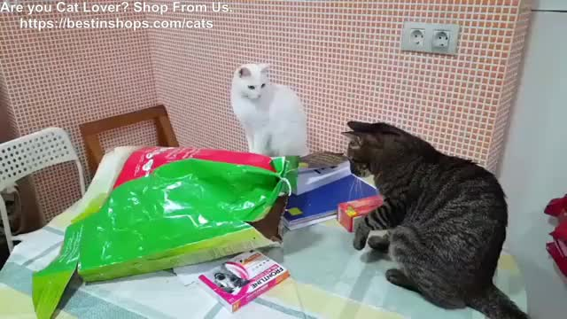 Watch and share Catlovers GIFs and Catlover GIFs by Kathleen Ema on Gfycat