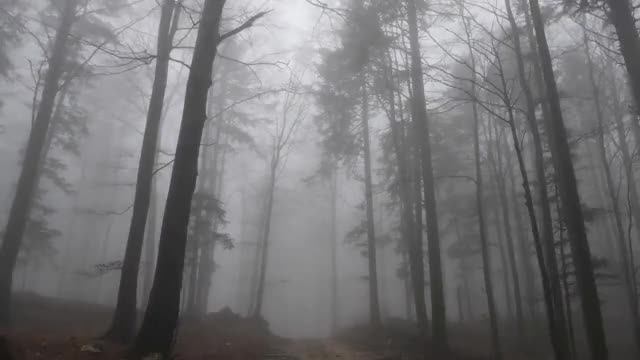 Relaxing Virtual Drive Through Foggy Forest / 1 Hour Rain Sound on