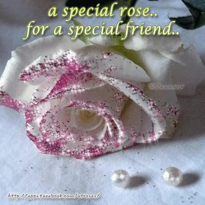 Watch and share A Special Rose... For A Special Friend.. GIFs on Gfycat