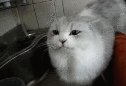 Watch cat drinking tap water GIF on Gfycat. Discover more related GIFs on Gfycat
