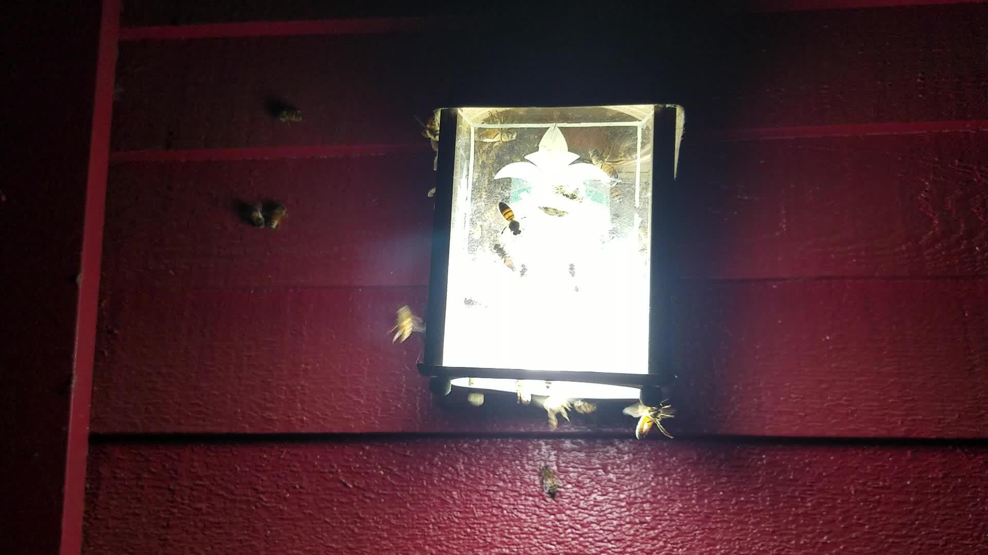 beekeeping, Zombees? GIFs