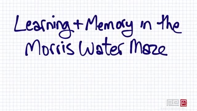 Watch and share Learning And Memory In The Morris Water Maze GIFs on Gfycat