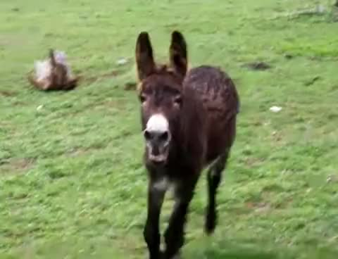 Watch this donkey GIF on Gfycat. Discover more donkey, fred GIFs on Gfycat