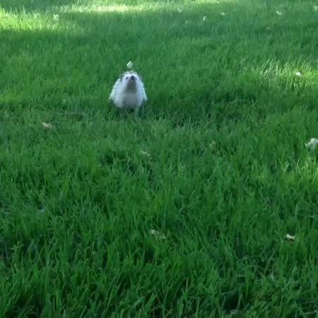 Hedgehog! GIFs