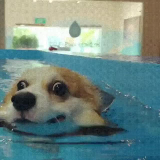 Watch and share Going For A Swim. - Imgur GIFs on Gfycat