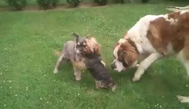 dog mma, MMA dogs GIFs