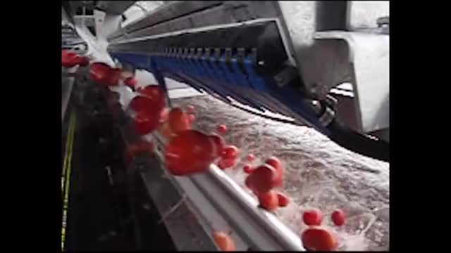 Watch Tomato sorting machine GIF on Gfycat. Discover more EngineeringPorn, sorting, tomra (business operation) GIFs on Gfycat