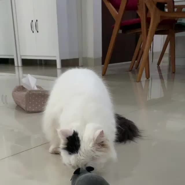 cats, What is this thing? Let me give it a sniff... GIFs