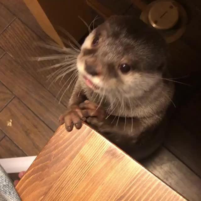 otter,  GIFs