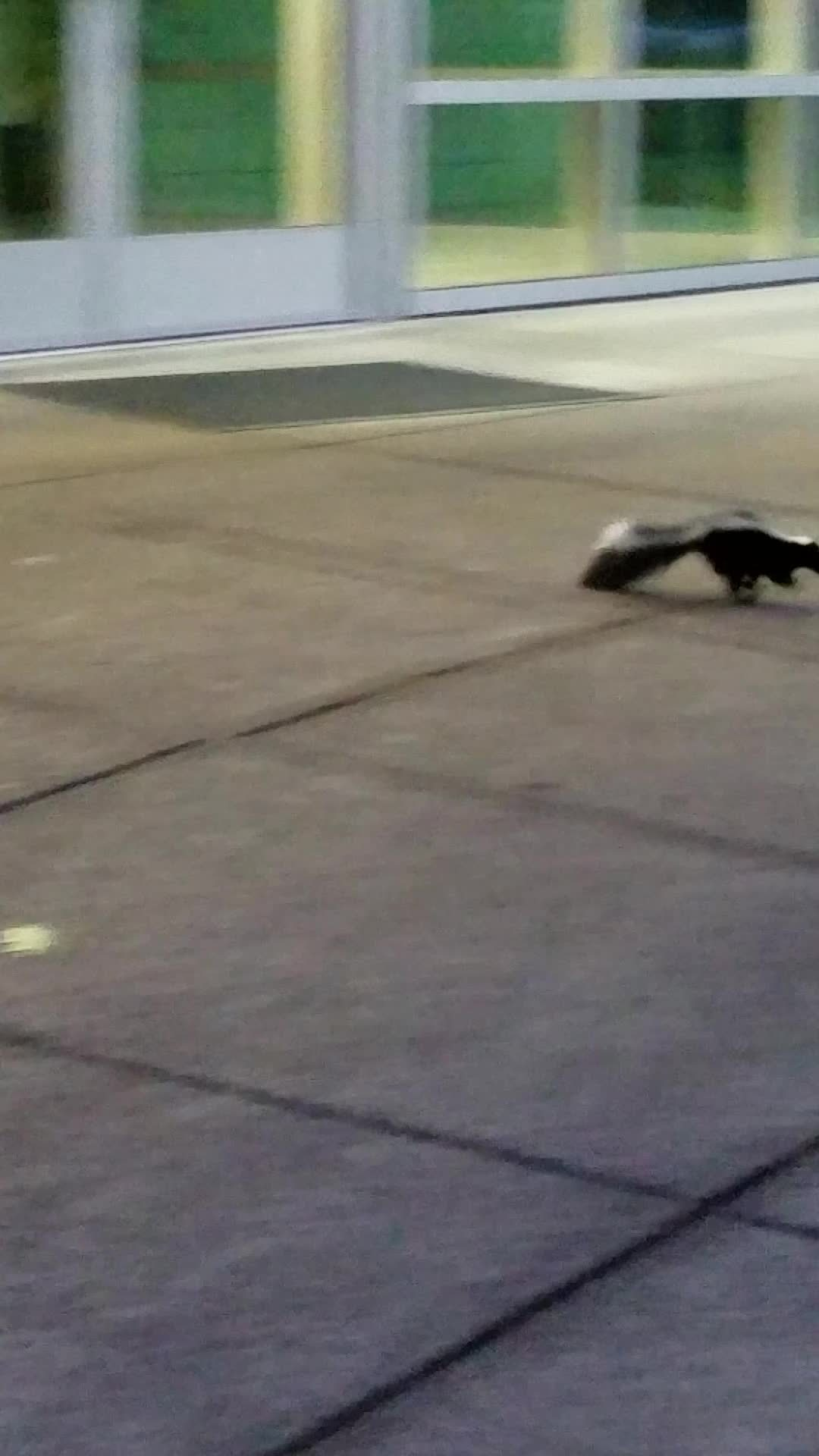 tifu, Skunk from Pokémon go GIFs