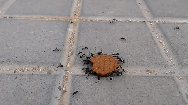 Watch and share Ants GIFs on Gfycat