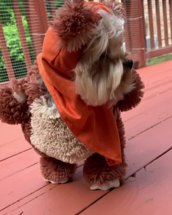 Watch and share Yorkie In Ewok Costume GIFs by Оксана on Gfycat
