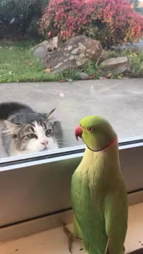 Watch and share Parrot Plays Peek-a-Boo With Neighbors Cat || ViralHog GIFs by The Livery of GIFs on Gfycat