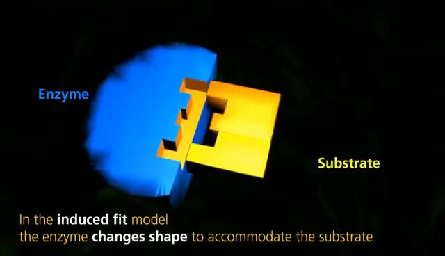 Watch and share Enzyme Function | University Of Surrey GIFs on Gfycat