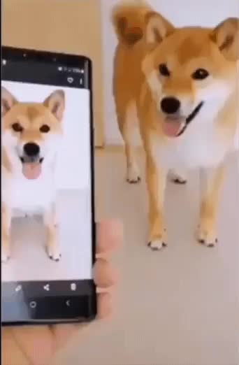 Watch and share Make The Pose, Doge... GIFs by GifWorld on Gfycat