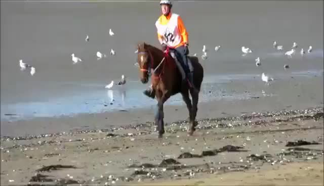 Watch and share Caballos GIFs on Gfycat