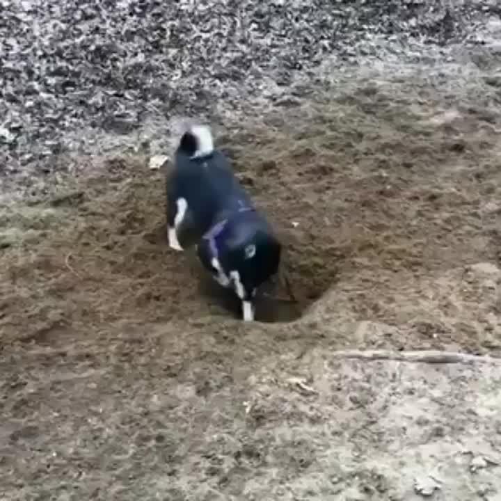 dog, puppy, dog GIFs