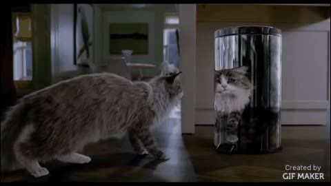 Watch Nine Lives GIF by @familymovies on Gfycat. Discover more catpranks, funny, gifs GIFs on Gfycat