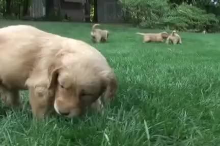 Watch and share Puppies GIFs on Gfycat