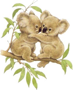 Watch and share Koala Bear animated stickers on Gfycat