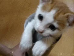 Watch and share Adorable GIFs and Kitten GIFs on Gfycat