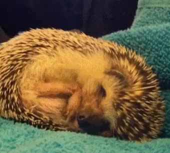 Watch Hedgehog dreaming. GIF on Gfycat. Discover more related GIFs on Gfycat