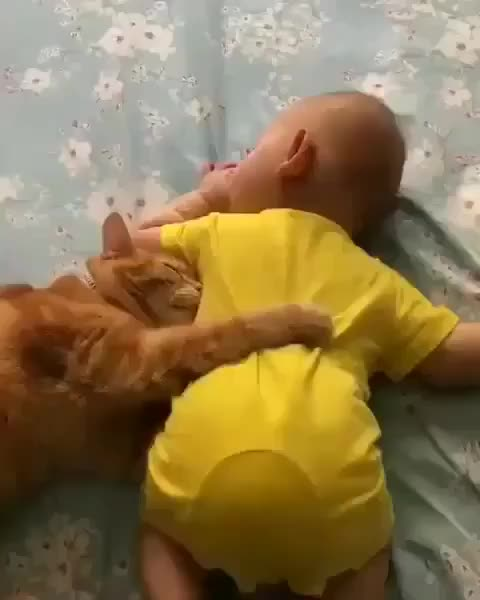 meow meow cat club, 📽 from Unknown ( Please email for credit or removal ) 😍😍😍😍😍 ~ double tap ❤❤ GIFs