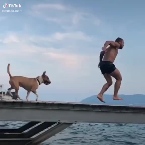 Watch and share Awesome GIFs and Jump GIFs by TikTok on Gfycat