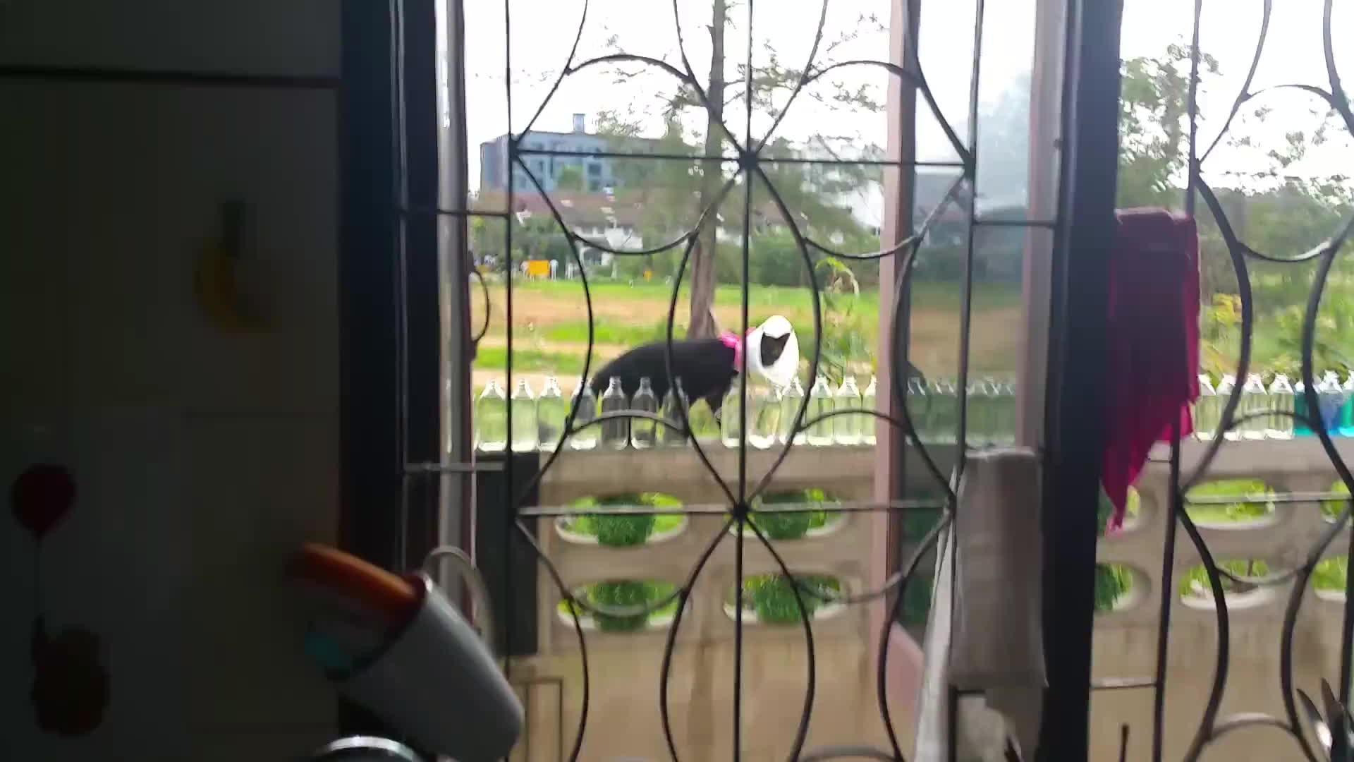 animalsbeingjerks, Dammit, cat! GIFs