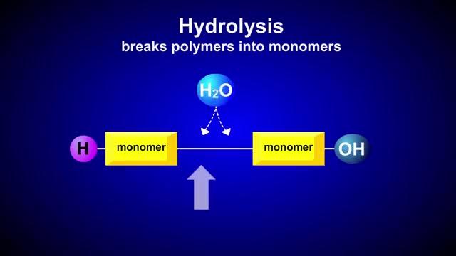 Watch and share Hydrolysis GIFs and Monomer GIFs on Gfycat