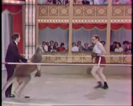 Watch Woody Allen vs. canguro [2] GIF on Gfycat. Discover more Woody Allen, boxeo, canguro GIFs on Gfycat