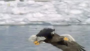 Eagles GIFs