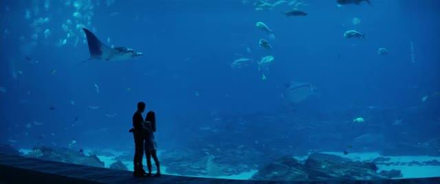 Watch and share Aquarium Scene GIFs on Gfycat