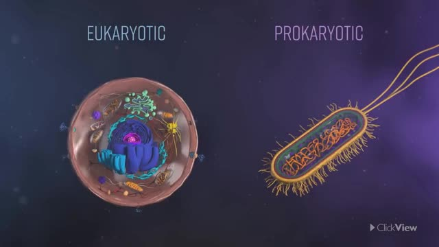 Watch Eukaryotic vs Prokaryotic Cells GIF on Gfycat. Discover more Biology, Cells, KS3, SCIENCE, acssu149, classroom, eukaryotic, lessons, prokaryotic, resources GIFs on Gfycat