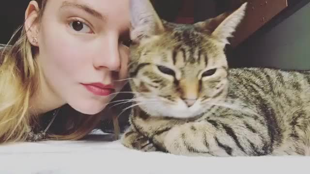 Watch and share Anya Taylor Joy GIFs and Cat GIFs by dancingcthulhu on Gfycat
